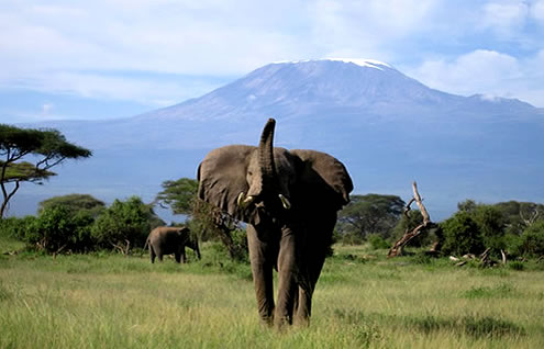 1 Day Nairobi to Amboseli Safari
