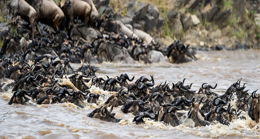 Luxury Budget 2018/2019 Wildebeest Migration Safari