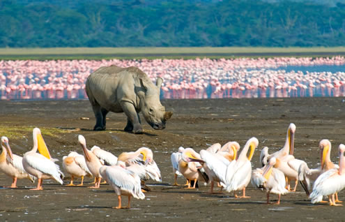 2 Days Nairobi Safari to Lake Nakuru