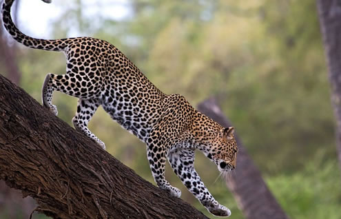 4 Days Safari Package from Nairobi to Masai Mara and Lake Nakuru