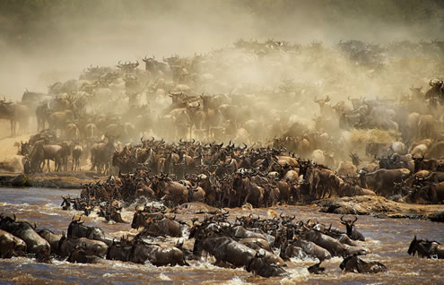 7 Days Kenya Safari Package to Masai Mara, Lake Nakuru, Amboseli, Tsavo West and Tsavo East Safari