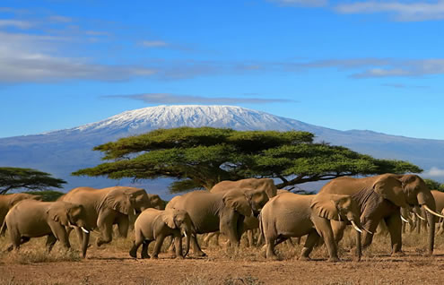 3 Days Mombasa - Amboseli - Nairobi Safari Package