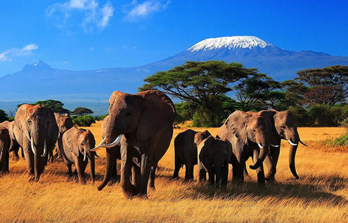 3 Days Mombasa to Nairobi Safari Package - Tsavo East and Amboseli Park ending in Nairobi - 3 Days Safari to Amboseli