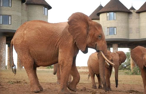 4 Days Mombasa Safari Package to Tsavo East, Tsavo West and Taita Salt Lick