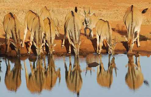 5 Days Mombasa Safari Package to Tsavo East, Taita Salt Lick, Tsavo west and Amboseli