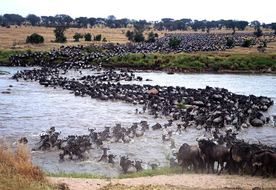Wildbeest Migration Tanzania