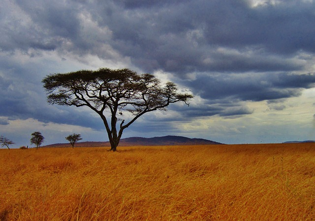 8 Days Kenya and Tanzania Combined Safari - Amboseli, Ngorongoro Crater, Serengeti and Lake Manyara