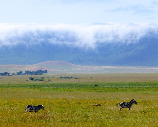 3 Day Ngorongoro Crater and Lake Manyara National Park Safari