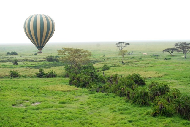 7 Days Safari Lake Manyara / Serengeti Plains / Ngorogoro Crater / Tarangire