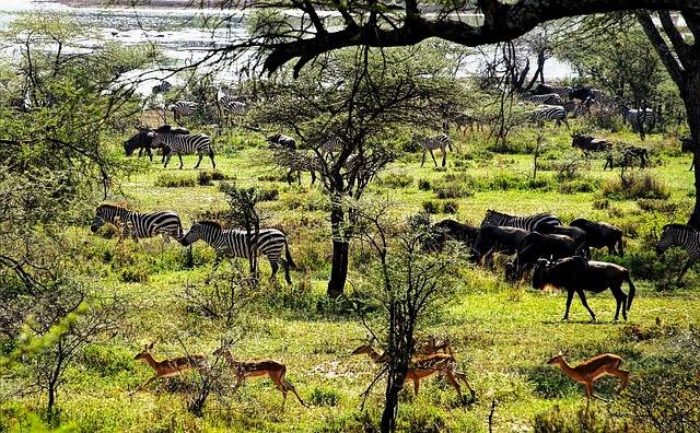 3 Days Safari - Lake Manyara / Ngorogoro Crater / Tarangire National Park