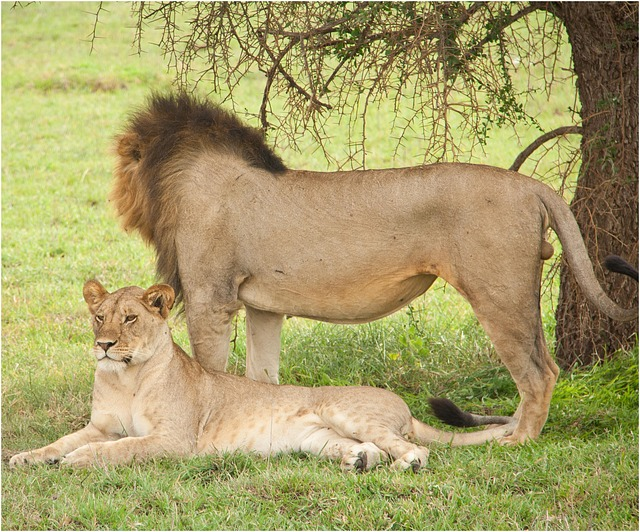 3 Days Ngorongoro Crater and Lake Manyara National Park Safari