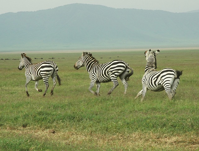 6 Days Tanzania Safari to Ngorongoro Crater, Serengeti and Lake Manyara