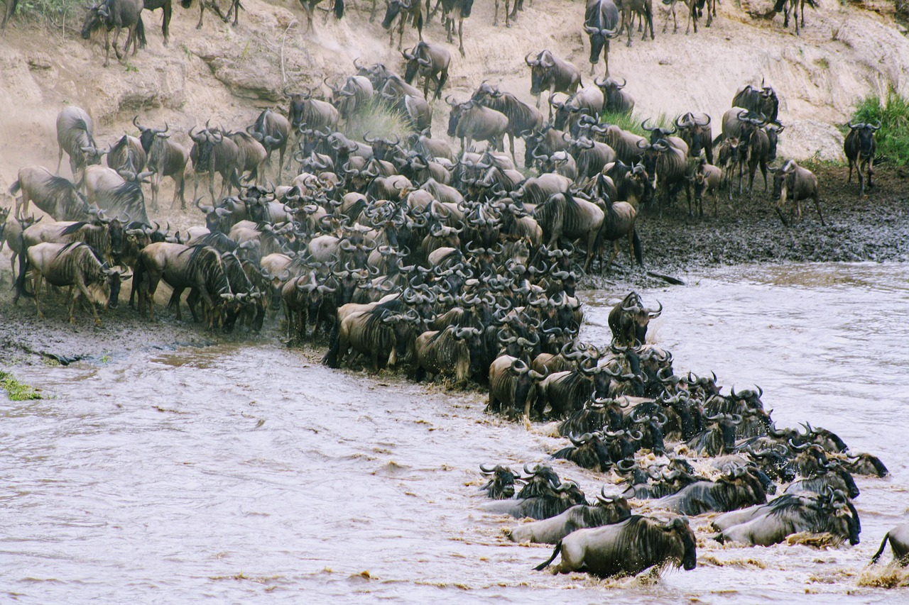 4 Days 3 Nights Masai Mara Flying  Safari